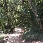 Forest Falls (Sabie) Height